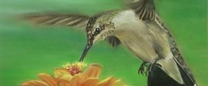 Kolibri_slim