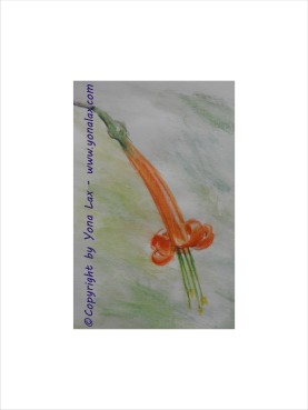 KORALLENFUCHSIE • 50€ • 9,5x14,5cm