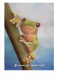 Frosch • 60€ • 23x17cm/40x30cm